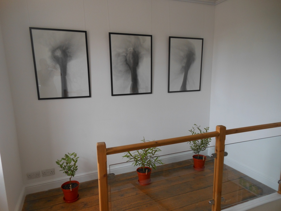 Trace Drawings installed at exhibition 'In the time of absence' with associated Willow Sculptures.